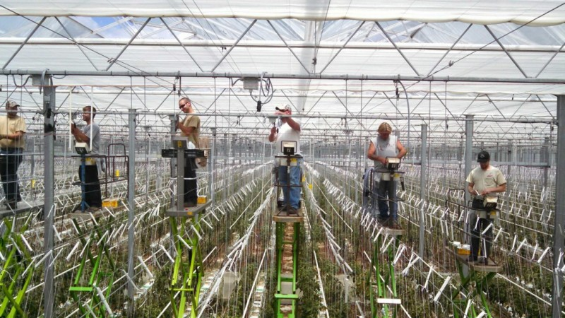 Agriculture Electricians
